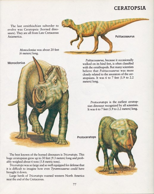 Ceratopsians by Peter Zallinger