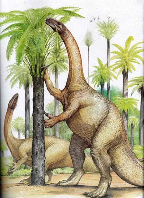 Plateosaurus by Christopher Santoro