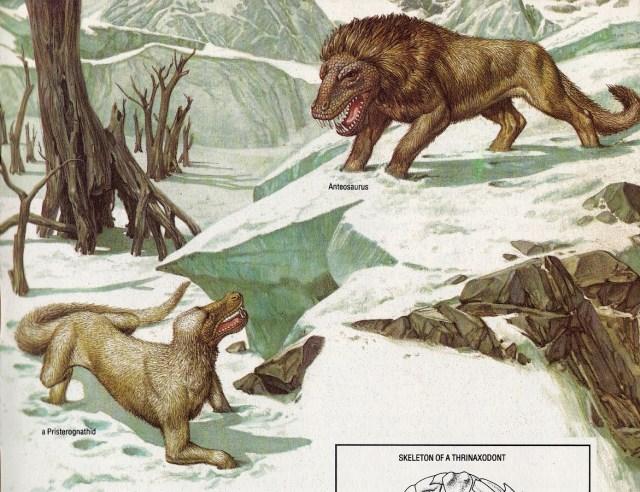 Anteosaurus by Andrea and Luciano Corbella