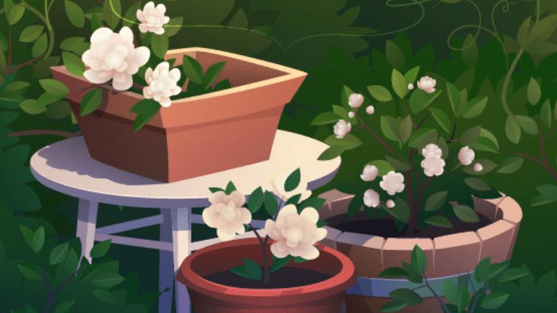 somptueuses pour votre jardin