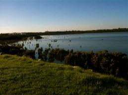 Hastings black swans