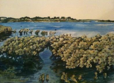 Mangroves at Hastings detail