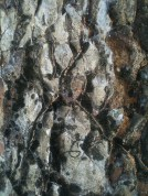 Madonna of the Rocks, Smiths Beach
