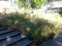 Grasslands at the State Library