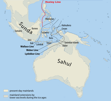 The Wallace and Huxley Lines separating fauna species of Asia and Australasia. The great areas show the land mass in the last glacial period by Ataileopard