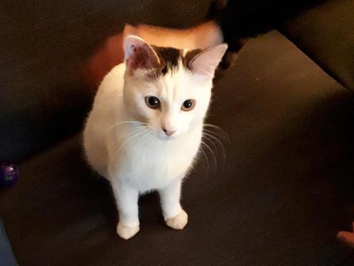 Oups chat femelle 1 an à l'adoption Paris