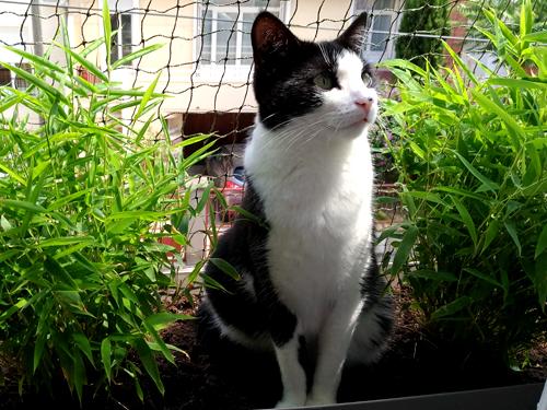 Témoignage de la famille d'adoption du chat MYA adoptée à 1 an avec notre association