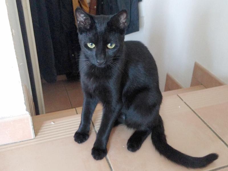 pauline-adoption-chat-noir-paris