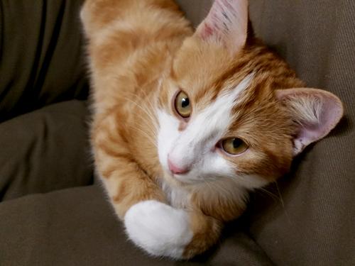 Témoignage de l'adoption du chaton KODAMA
