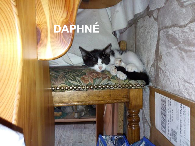daphne-wp-carrousel-01