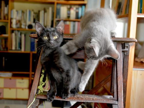 lilou-lupin-chaton-02-famille