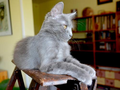 lilou-lupin-chaton-03-famille