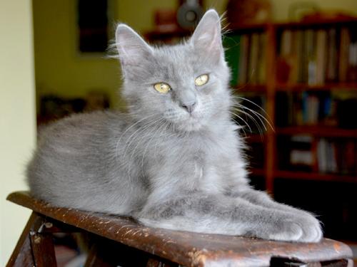 lilou-lupin-chaton-04-famille