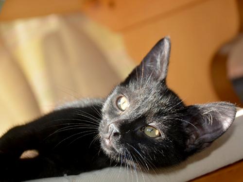 lilou-lupin-chaton-07-famille