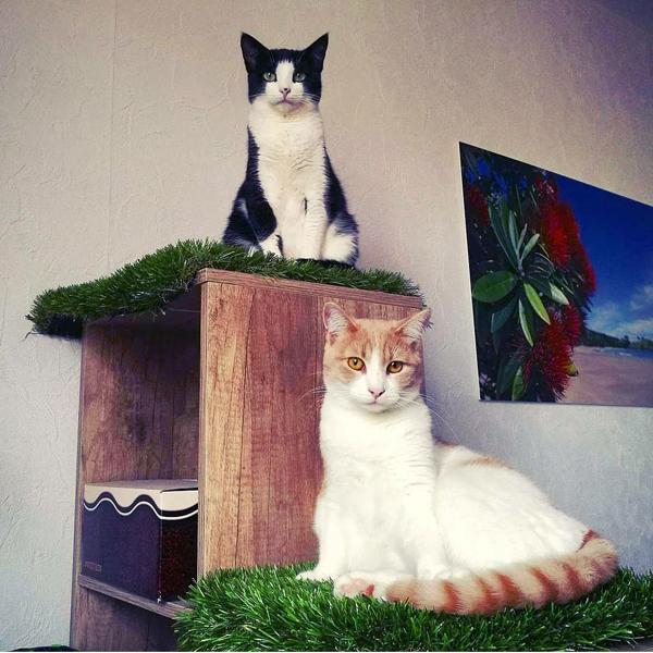duo de chats en famille