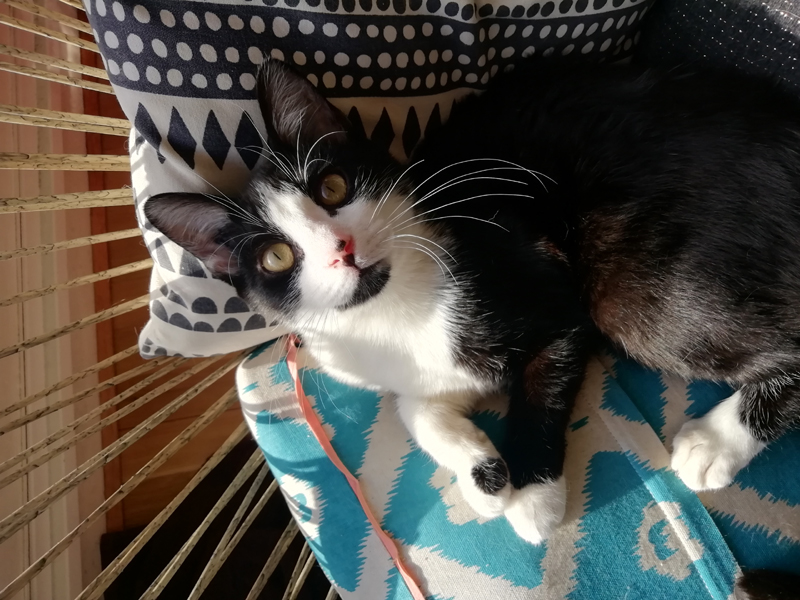 SOCQUETTE-chaton-nb-adoption