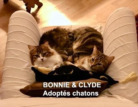 BONNIE-CLYDE-BLOG