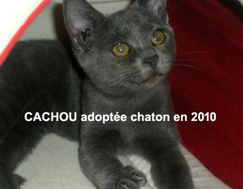 CACHOU-CHATON-01
