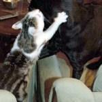 gaia le chat qui joue avec un chien