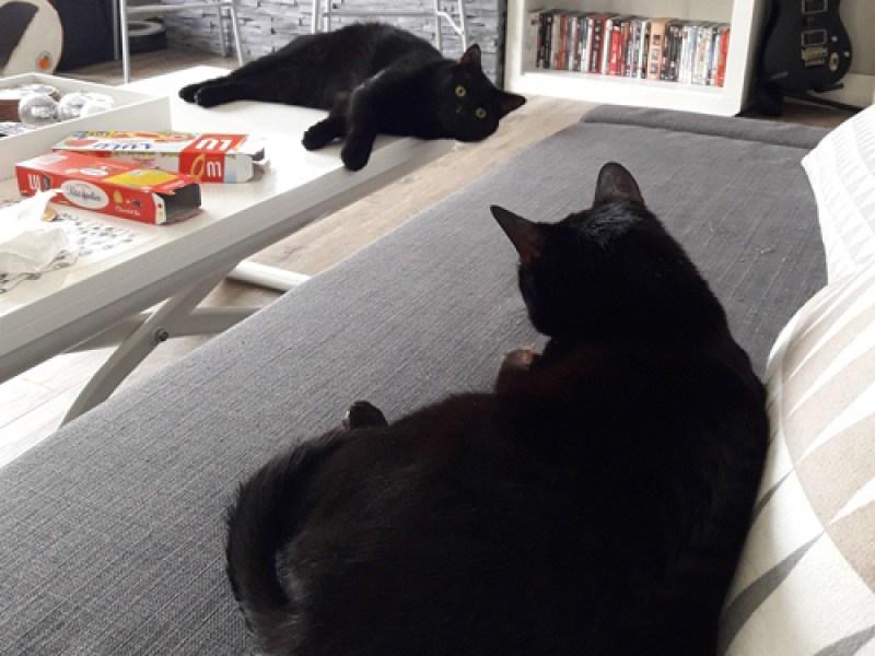 Témoignage de l'adoption de deux chats ….. LOKI & FREYJA chaton et chat adulte