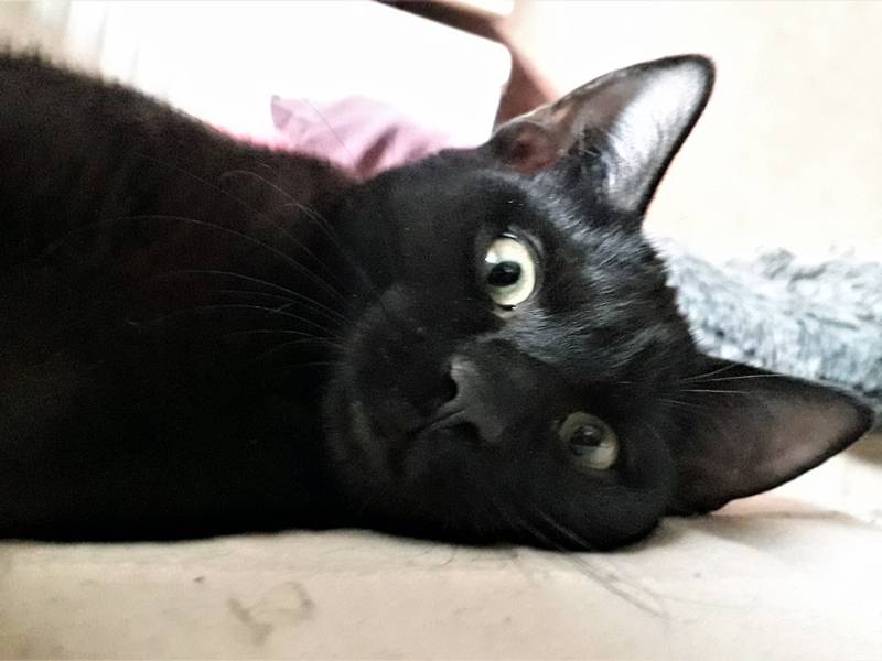 PEPPER-chaton-noir-02