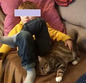 Plume chat tigrée à l'adoption qui fait un câlin avec un enfant