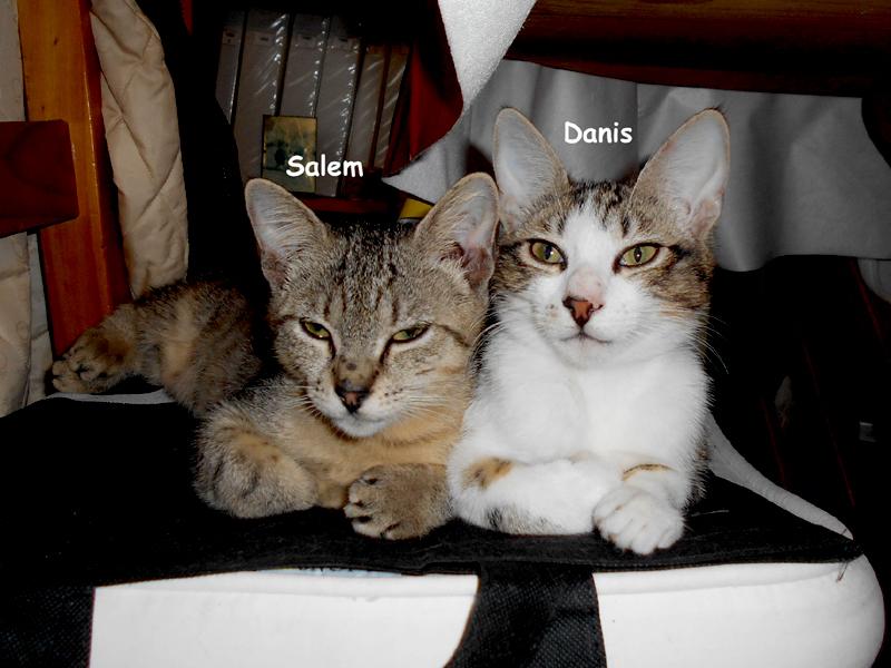SALEM-DANIS-01