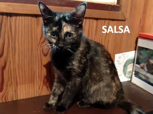 SALSA-02