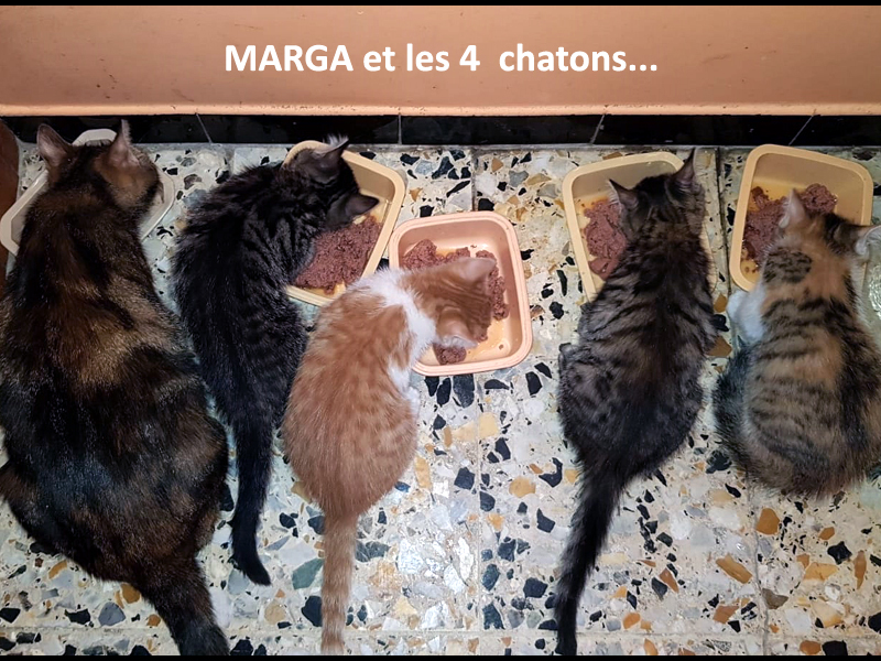 MARGA-chatons-adoptions-tétée