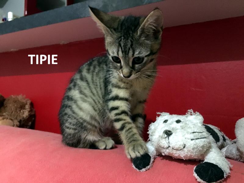 TIPIE-01