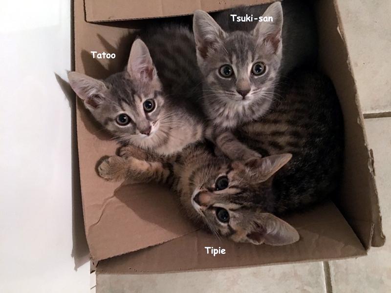 trio-chatons-03