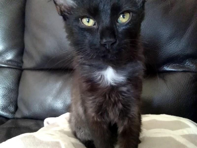BARBOSA-chaton-noir-adoption-paris
