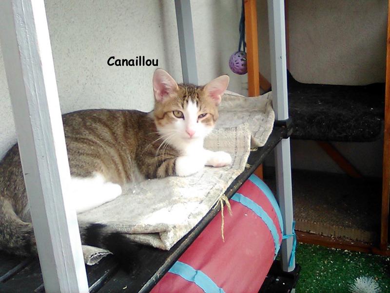 CANAILLOU-04