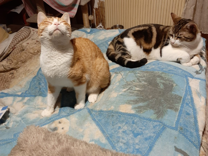 CANDY-OLIVER-DUO-CHATS-ADOPTION