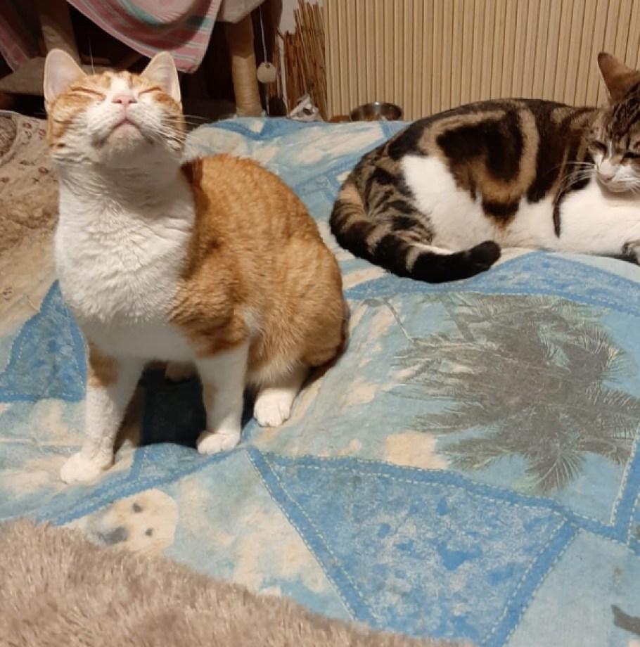 Nous avons trouvé une famille pour CANDY & OLIVER Jeunes Chats complices