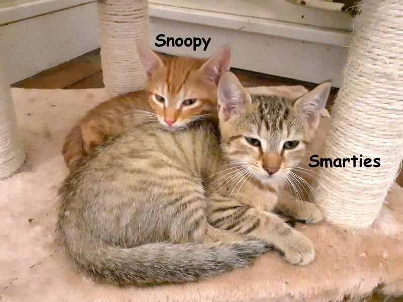 SMARTIES-SNOOPY-01