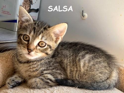 salsa chaton à son arrivée dans l'association avant son adoption