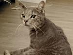 chat femelle assise