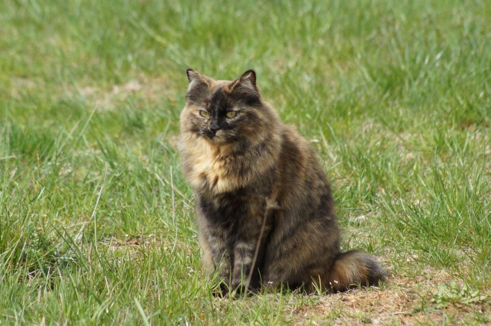 ma chatte qui se prénomme Tallulah