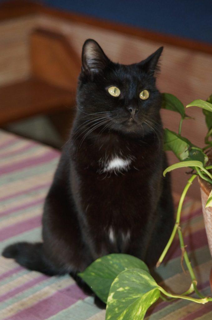 ma chatte qui se prénomme WAPI