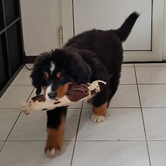 Saucibois pour chien créé par Georgia