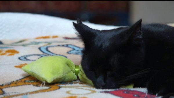 """Une chatte se prénommant Wapi est en train de dormir sur un """"Petit Coussin"""", une création de Gerogia"""