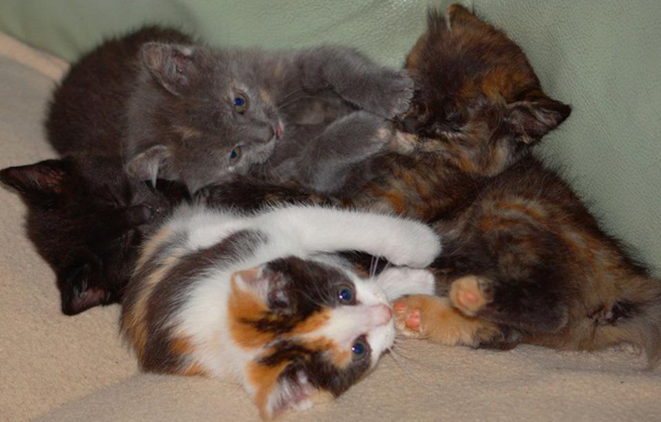 portée de 4 chatonnes soeurs