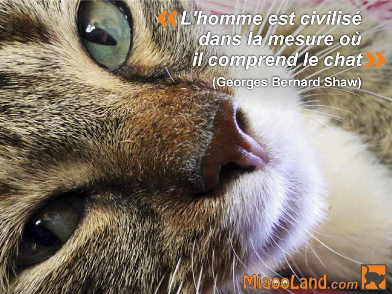 L'homme est civilisé dans la mesure où il comprend le chat. Citation de Georges Bernard Shaw