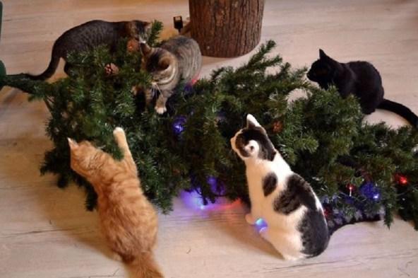 sapin de Noël au sol avec des chats autour