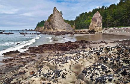 Rialto Beach Tide-pools