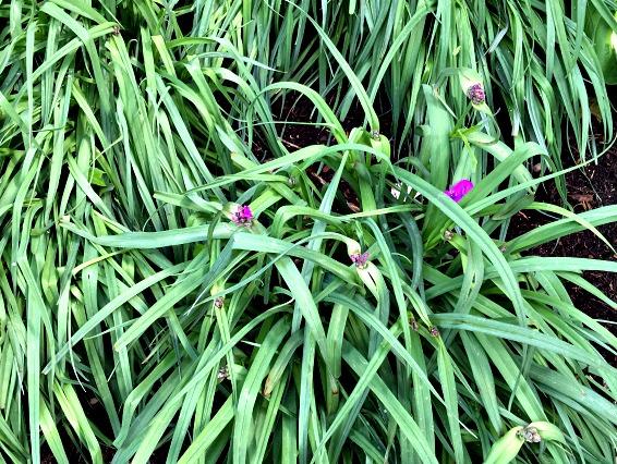 Garden Tour at www.chathamhillonthelake.com purple flower