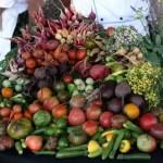 Harvest Abundance Dinner and Fundraiser