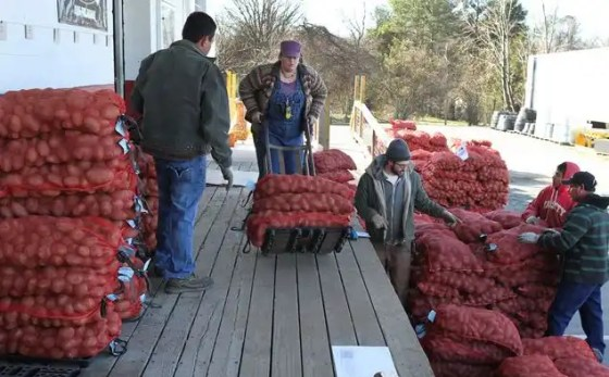 Almost all of the 20,000 lbs. of organic seed potatoes were pre-ordered by farmers throughout the piedmont region. Photo by Debbie Roos.