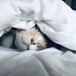 kitten under comforter quilt